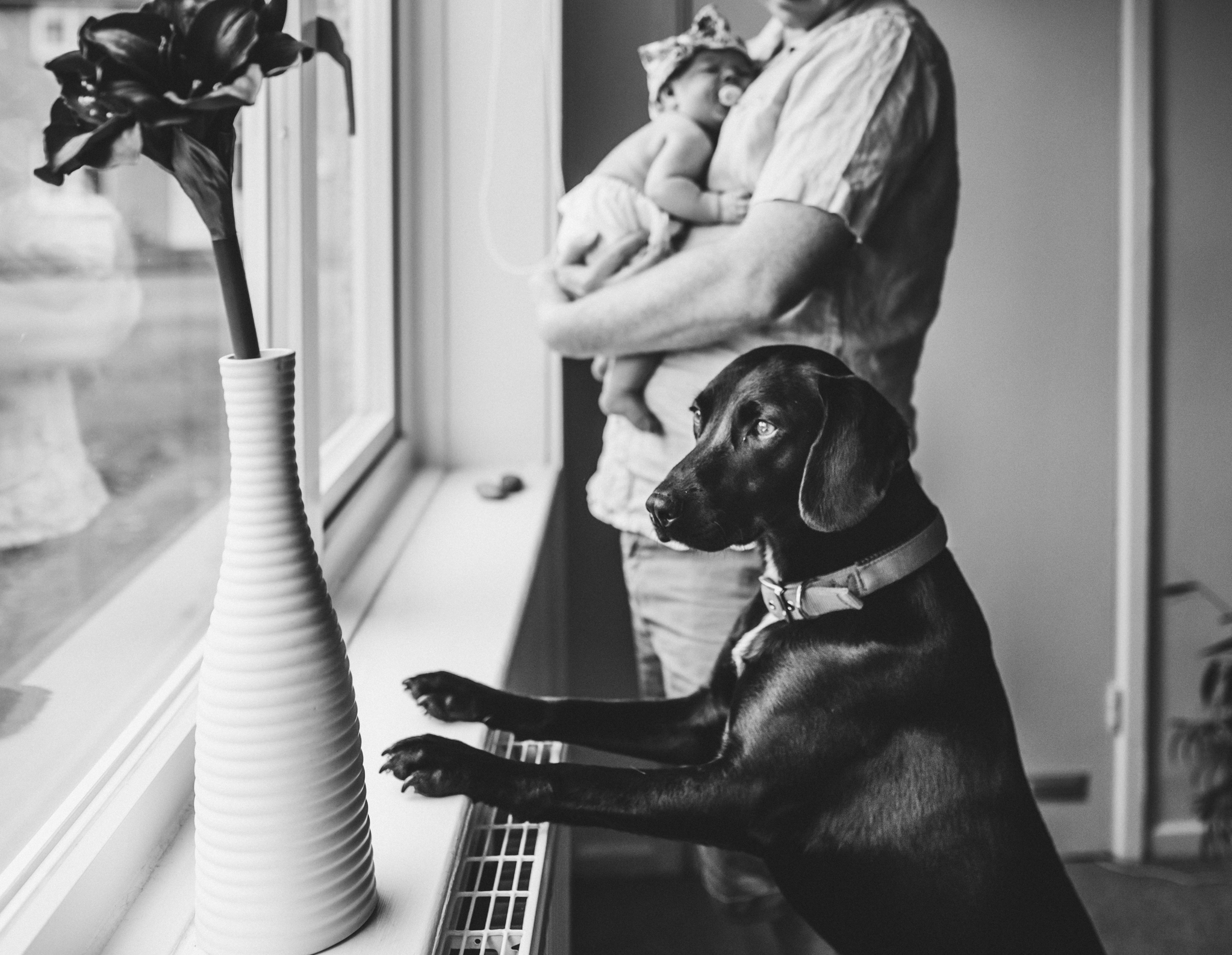 dog, baby and dad looking out of window